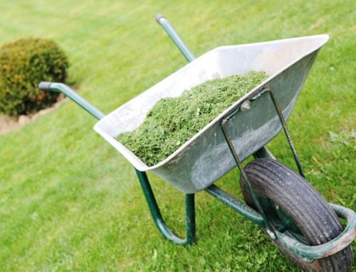 What are the rules for NYS Sales Tax for my profession?-Landscapers